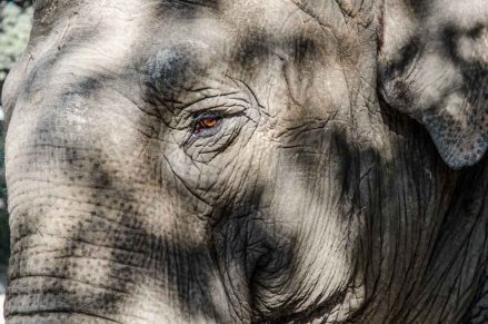 Elefanten-Dasein