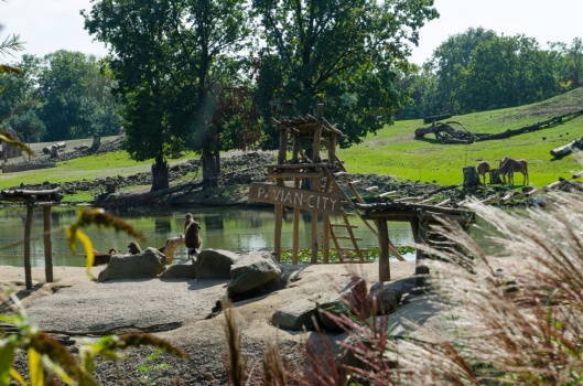 Zoom Erlebniswelt Gelsenkirchen: Afrika - Pavian City