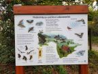 Fledermauskunde im Waldmuseum